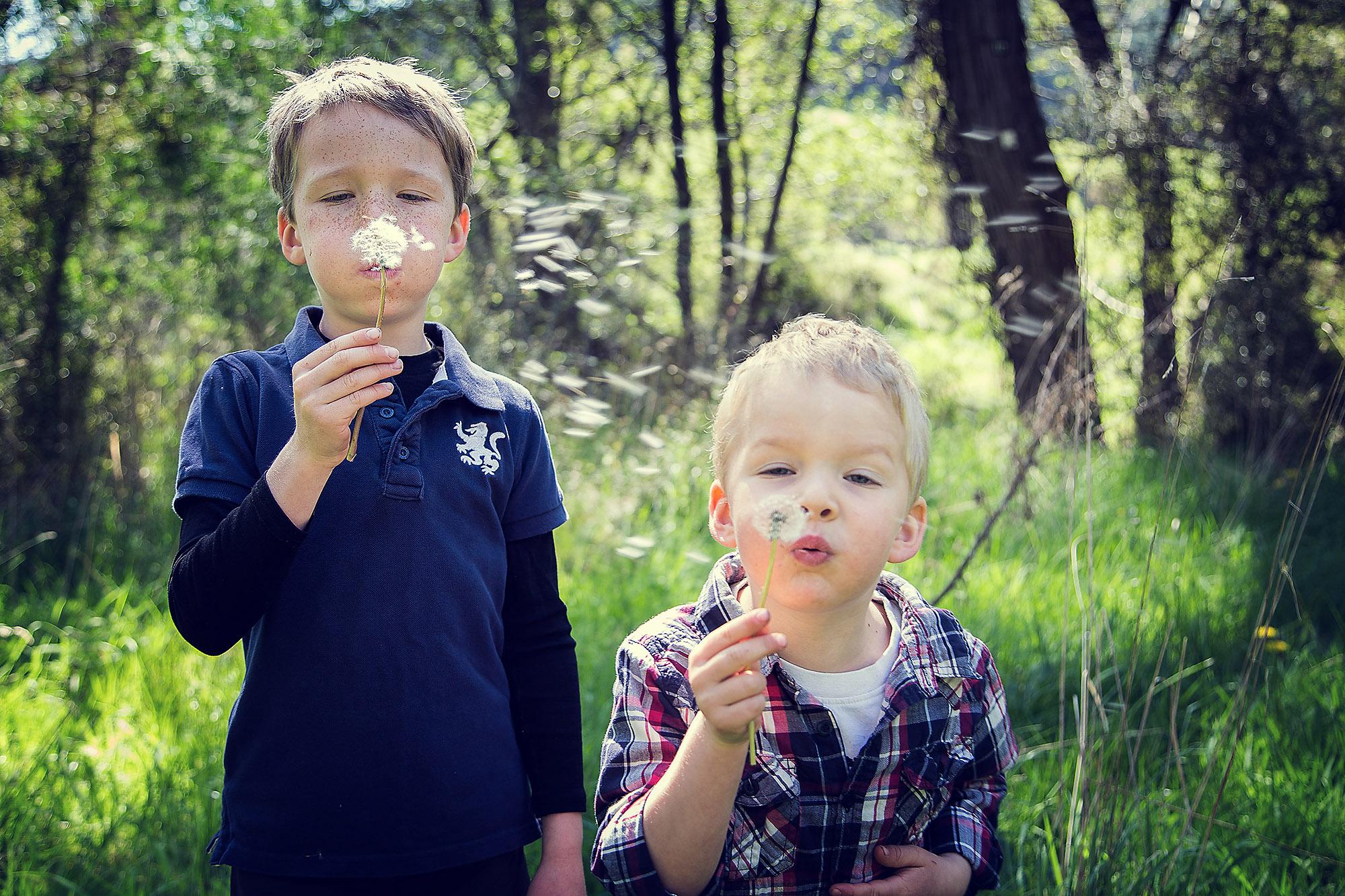 Christchurch Portrait Photographer two boys blowing dandelion outdoors family portrait