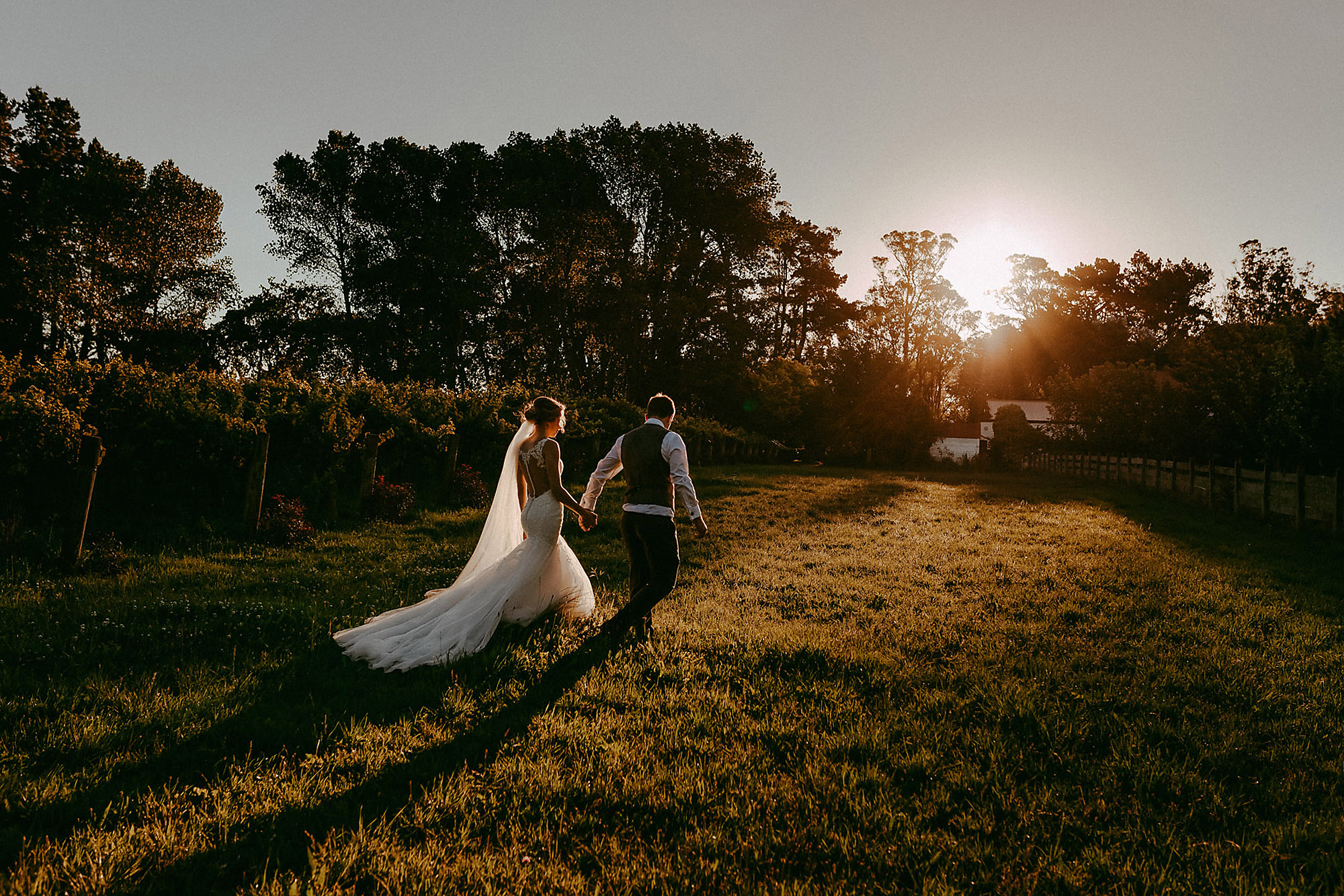 bride and groom walking in vines at sunset trents vineyard christchurch wedding photographer